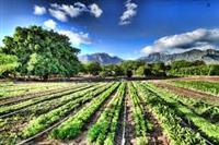 Adi Organic Farms