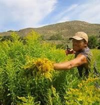Ancestree Organic Herbs LLC