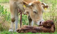 Animals are Mothers Too