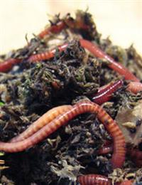 Basics of Vermicomposting