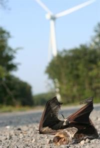 Bats & Wind Sustainable Energy