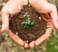 Boostinator 8 Application Fertilizer Service