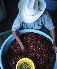 Certified Organic and Fair Trade Coffee Beans