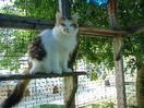 Domestic Cats for Sale