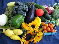 Eco Agriculture Program