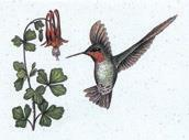 Eco-friendly Hummingbirds Stationery
