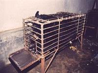 End Bear Bile Farming