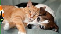 Green Organization for Animal Help