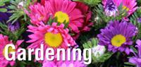 Green Professional Lawn Care & Organic Gardening Service