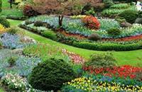 Heart Beet Organic Gardening