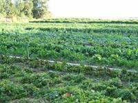 M&M Robertson Organic Farms