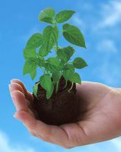 Nutrients Plant Food
