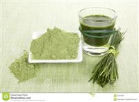 Organic Wheat Grass Powder Health