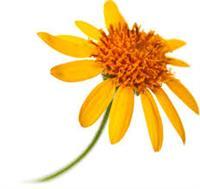 Stimulating Homeopathy