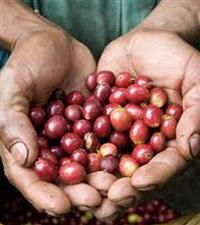 Sustainable and Fair Trade Coffee Beans