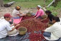 Sustainable and Organic Coffee Beans