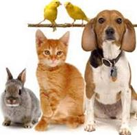 Things you should think about before adopting a pet