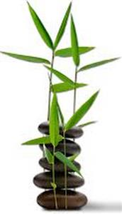 Why Bamboo is so Eco Friendly